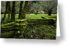 Mossy Fence 2 Greeting Card