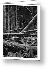 Natural Forest Greeting Card