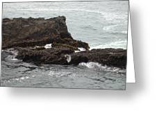 Pacific Ocean In July Greeting Card
