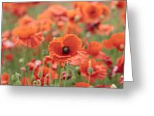 Poppies H Greeting Card