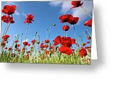 Poppies Season Greeting Card