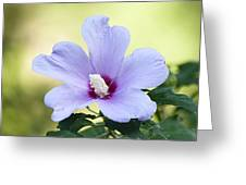 Purple Althea Greeting Card by Kenneth Albin