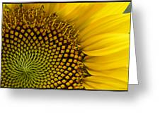 Sunflower Study Greeting Card