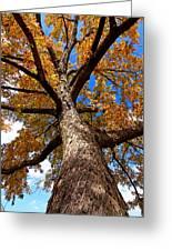 Tall Fall Tree Greeting Card