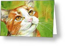 Tan And White Domestic Cat Greeting Card by Cherilynn Wood