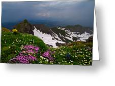 The Alps Wildflowers Greeting Card