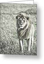 The King Stands Tall Greeting Card
