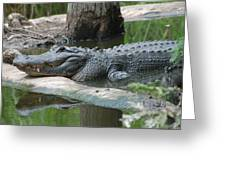 The Other Florida Gator Greeting Card
