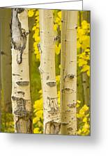 Three Autumn Aspens Greeting Card by James BO  Insogna