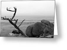 Tree And Boulder Greeting Card