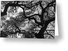 Tree Gazing Greeting Card