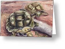 Turtle Friends Greeting Card