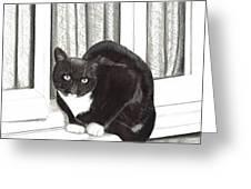 Tuxedo Cat Sitting In Window Greeting Card