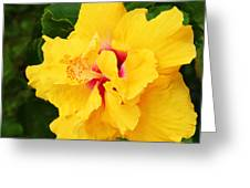 Yellow Double Hibiscus Greeting Card