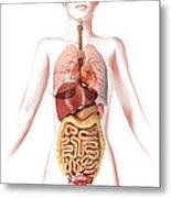 Anatomy Of Female Body With Internal Metal Print by Leonello Calvetti