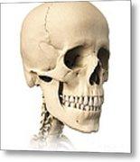 Anatomy Of Human Skull, Side View Metal Print
