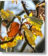 Autumn Leaves Metal Print by Design Windmill