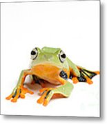 Gliding Frog Metal Print by Scott Linstead