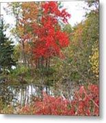 Red Tree Metal Print by Margaret McDermott