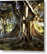 Roots Metal Print by George Lenz