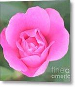 Rose. Metal Print by Sylvia  Niklasson