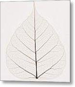 Transparent Leaf Metal Print by Kelly Redinger