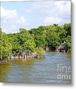 Mangrove Forest Metal Print by Carol Ailles