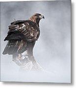 Golden Eagle Metal Print by Andy Astbury