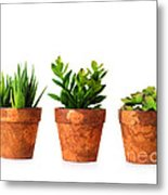 3 Indoor Plants Metal Print by Boon Mee