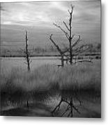 Infrared Picture Of Nature Areas In The Netherlands Dwingelderveld Metal Print