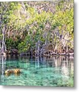 A Dip In The Rainbow Metal Print by Bob Jackson