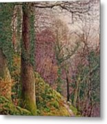 A Path In The Wood Metal Print