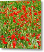 All Red Flower Beautiful Metal Print