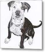 American Bull Dog As A Pup Metal Print
