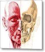 Anatomy Of A Male Human Head, With Half Metal Print by Leonello Calvetti