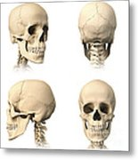 Anatomy Of Human Skull From Different Metal Print