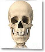 Anatomy Of Human Skull, Front View Metal Print