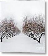 Apple Orchard Metal Print by Ken Marsh