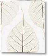 Arranged Leaves Metal Print