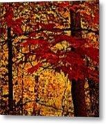 Autumn Mosiac  Metal Print by Dianne  Lacourciere