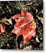 Autumns End Metal Print by JAMART Photography