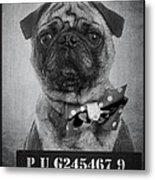 Bad Dog Metal Print by Edward Fielding