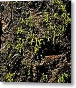 Bark Metal Print by Rebecca Christine Cardenas