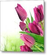Beautiful Purple Tulips  Flower Metal Print