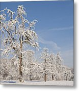 Beautiful Winter Day With Snow Covered Trees And Blue Sky Metal Print