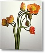 Bendy Poppies Metal Print by Norman Hollands