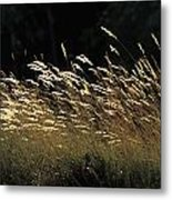 Blades Of Grass In The Sunlight Metal Print by Jim Holmes