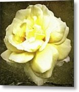 Bloom In Full Metal Print by Cathie Tyler