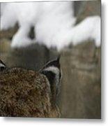 Bobcat Ears Metal Print