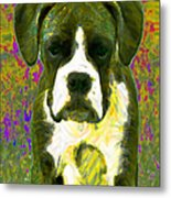 Boxer 20130126v2 Metal Print by Wingsdomain Art and Photography